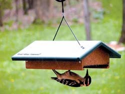 EcoTough Upside-Down Suet Feeder